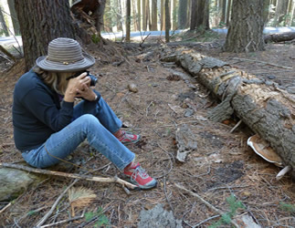 Debbie Viess taking ganoderma photo